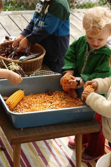 playing with corn sensory bin and chestnuts