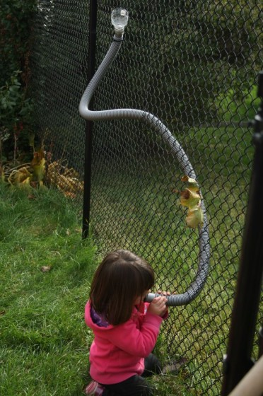corn run funnels and hoses through chain link fence