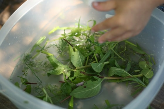 chopping and plucking fresh herbs for sensory play