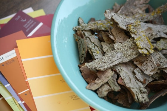 paint chip samples and bark pieces