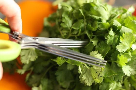 herb scissors cutting cilantro