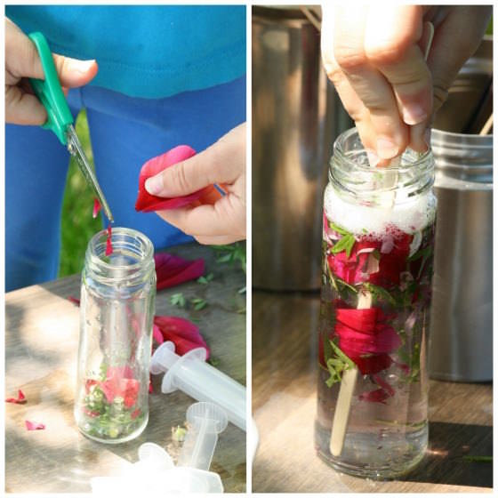 child cutting rose petals into a jar to make perfume