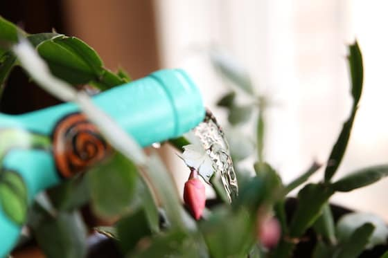 watering plant with wine bottle closeup