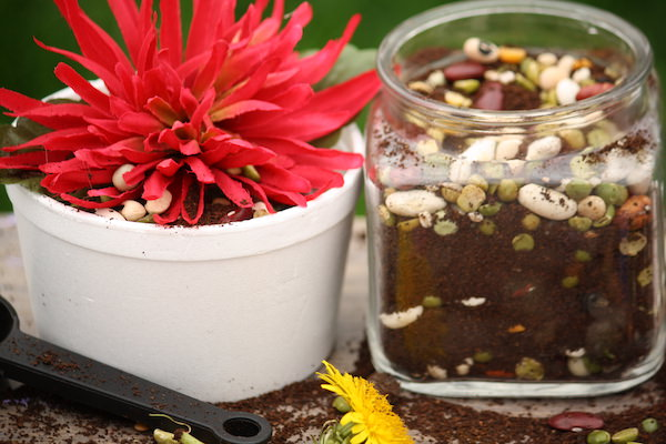 artificial flowers, containers, dried lentils, coffee grounds, scoop